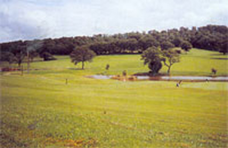 Raglan Parc Golf Course